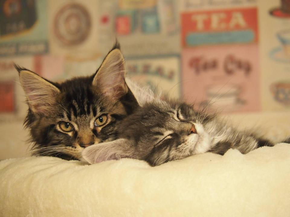 Les chatons adoptés